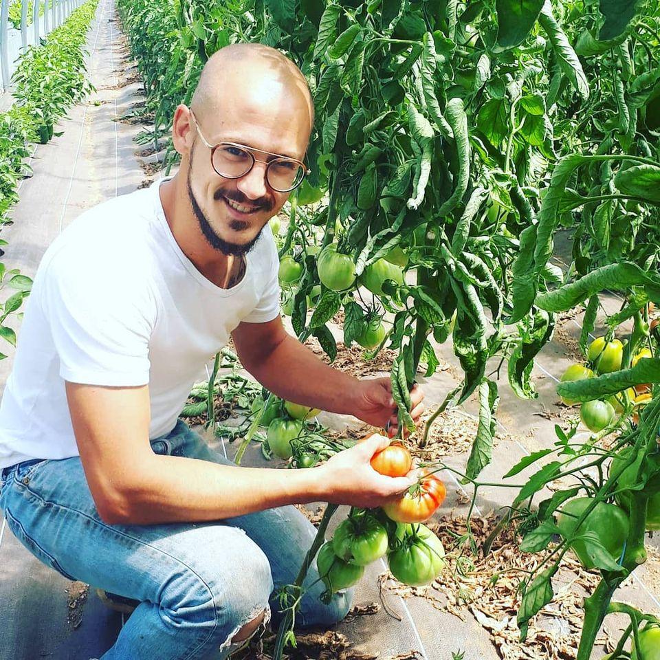 theophile_tomates
